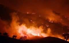 Australian Bushfires Destroy Environment and Diminish Wildlife Populations