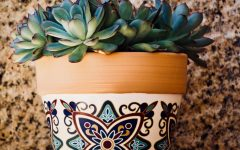 How To Care For A Succulent