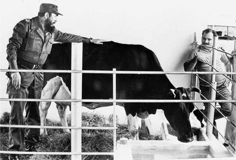 Casto with his cow Ubre Blanca
